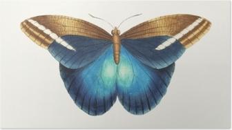 Poster Illustratie van dierenkunstwerk