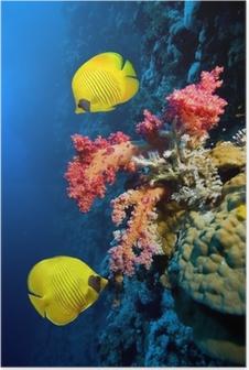 d947f4e613 Poster Poissons Discus avec bébé poisson nageant dans l'aquarium • Pixers®  - Nous vivons pour changer