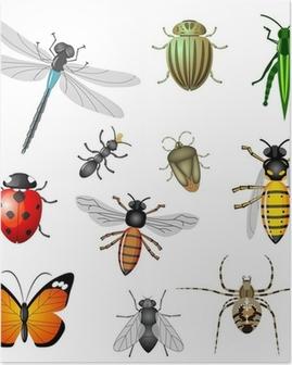 Poster Insecten of bugs, vector collectie