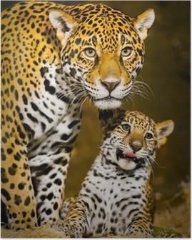 Jaguar Cubs Poster