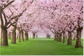 Poster Jardins en pleine floraison