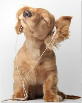 Poster Jeune chiot écoutant de la musique sur un ensemble de tête.