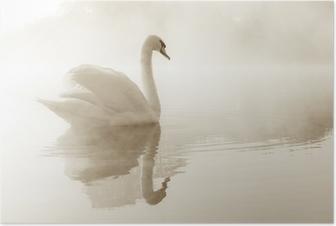 Poster Knölsvan Cygnus olor flygning över en dimma täckt sjö i gryningen