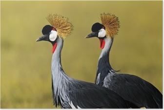 Poster Kraanvogel