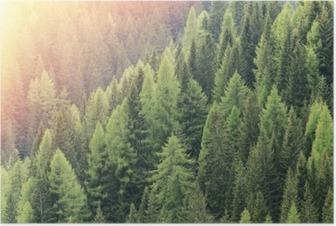 Póster La magia del bosque iluminado por la luz del sol. región de bosques de coníferas.