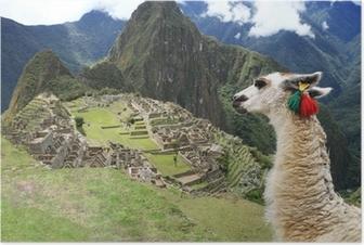 Poster Lama in Verloren Stad van Machu Picchu - Peru
