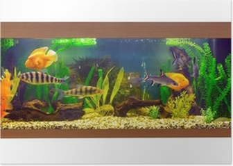Large Rectangular Aquarium With Tropical Fish Poster