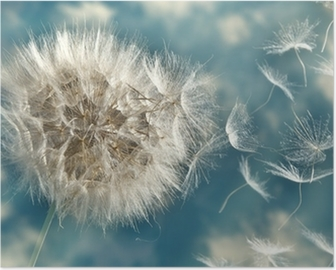 Póster Las semillas de diente de león en el viento perder