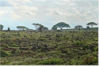 Poster Le paysage nature du Kenya. Kenya. Afrique.