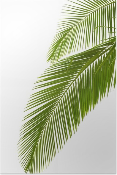 leaves of palm tree poster pixers we live to change