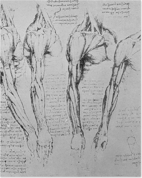 Poster Léonard de Vinci - Étude des bras - Reproductions