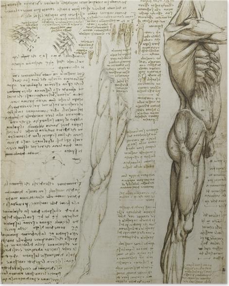 Poster Léonard de Vinci - L'étude anatomique - Reproductions