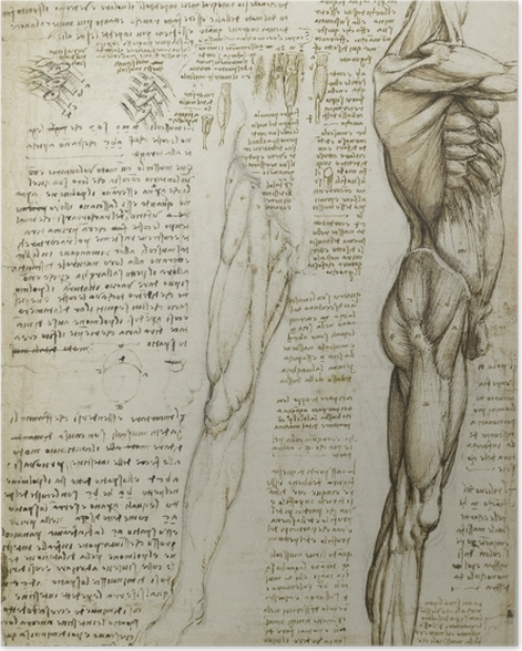 Leonardo Da Vinci Anatomical Study Poster Pixers We Live To