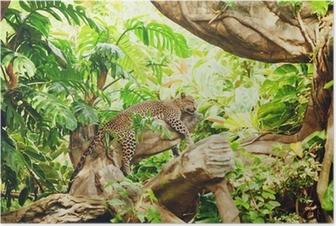 Poster Liggande (sova) leopard på trädgren