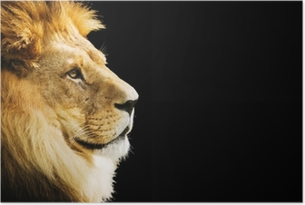 Lion portrait with copy space on black background Poster