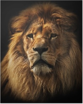 Lion portrait with rich mane on black Poster