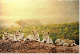 Poster Lionceaux attente ensemble.