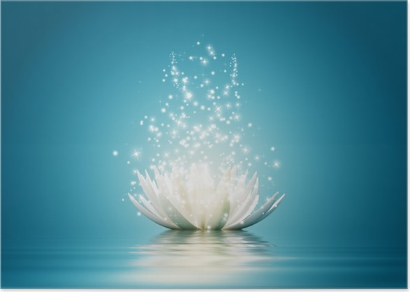 Lotus flower poster pixers we live to change lotus flower poster backgrounds mightylinksfo