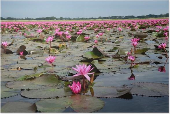 Lotus flowers in swamp poster pixers we live to change lotus flowers in swamp poster flowers mightylinksfo