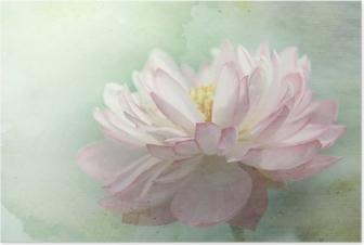 Poster Lotusblomma