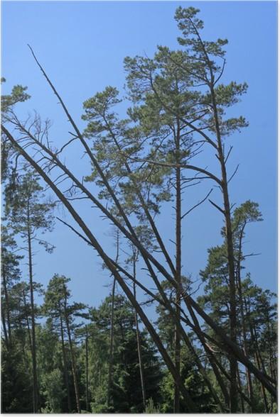 Lumbered Wood Stock Image Of Industry Brown Bark 22562161