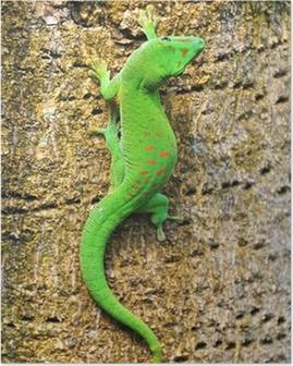 Madagascar day gecko .. Poster