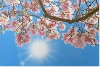 Poster Magnolia in de zon