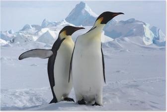 Poster Mais où est le pôle sud ? (Manchots Empereurs/Antarctique)
