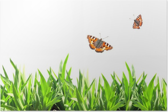 Póster Marco del verano con la hierba verde y mariposas • Pixers ...