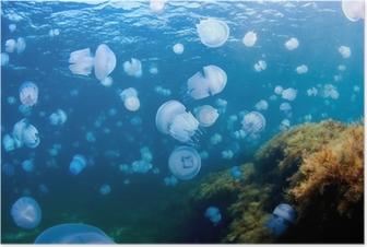 Póster Medusas (Rhizostoma pulmo), en el Mar Negro.
