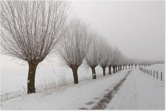 Misty winter landscape in the Netherlands with a row of pollard Poster