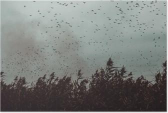 Póster Montón de pájaros que vuelan cerca de la caña en un estilo vintage cielo- oscuro blanco y negro