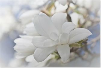 Poster Mooie magnolia bloesem