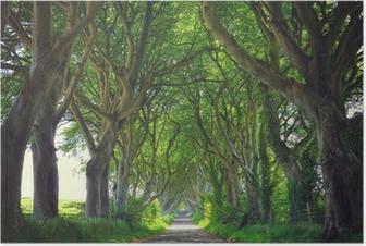 Poster Mörk Hedges träd