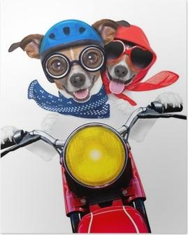 Poster Motorfiets paar honden