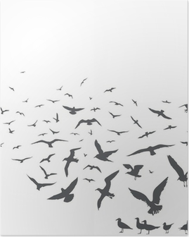 Poster Mouettes