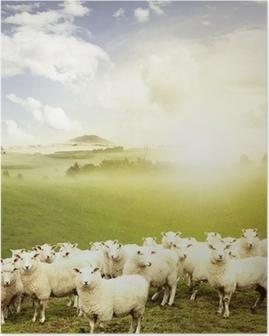 Poster Mouton