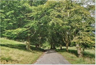 Narrow lane through an avenue of Lime trees. Poster