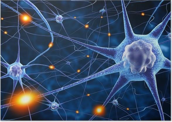 nerve cells Poster • Pixers® • We live to change