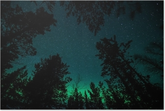 Northern lights above trees in Norway Poster