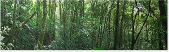 Poster Nuage forêt au Costa Rica