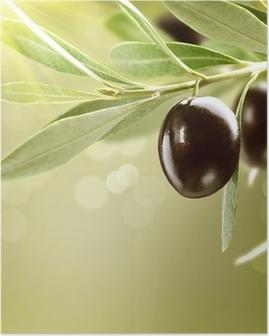 Poster Olives croissance. Noir Ripe olive sur un arbre