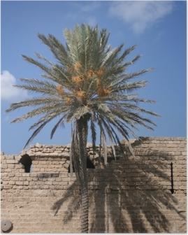 Poster Ombre et palmier