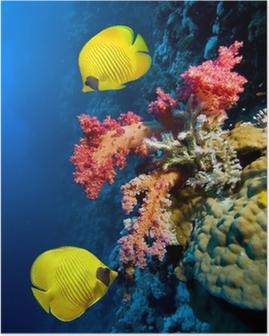 Poster Onderwater beeld van koraalrif en Gemaskerde vlinder vis