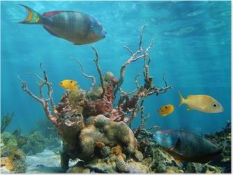 Poster Onderwater vorm en leven in de zee