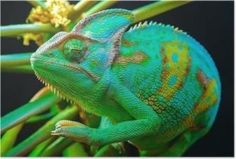 One Yemen chameleon Poster