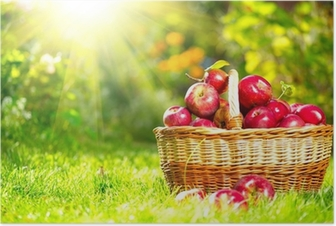 Organic Apples in a Basket outdoor. Orchard. Autumn Garden Poster