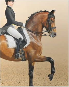 Poster Paardensport - dressuur, close-up