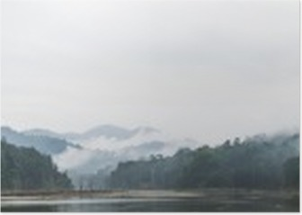 Panorama view of morning fog and dead trees in dense tropical rainforest, Perak, Malaysia Poster