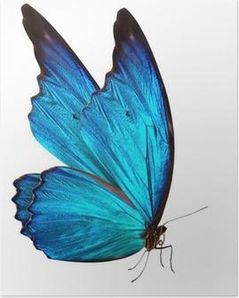 Poster Papillon macro fond
